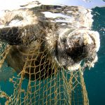 MedBioLitter: an open database on marine litter and biodiversity science