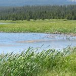 Coordinated policies to safeguard wetland ecosystems urgently needed